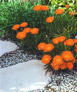 batu koral taman rumah