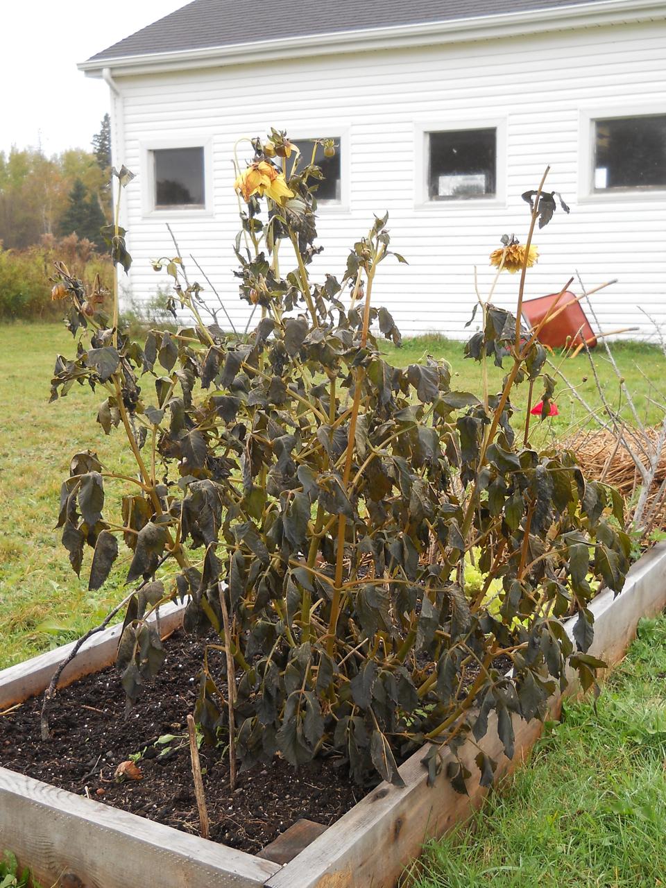 A Garden in Revolt - HorticultureHorticulture