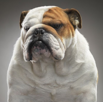 Awesome Dog Portrait Seen On www.coolpicturegallery.us
