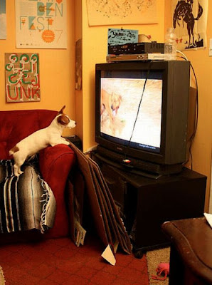 Pets watching TV Seen On www.coolpicturegallery.us