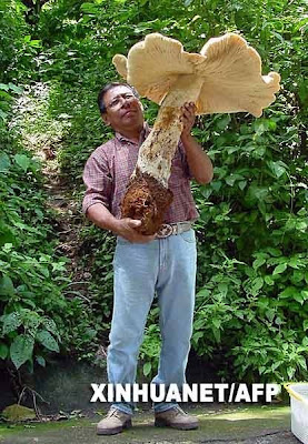 The Biggest Animal & Plant Ever Found In The World Seen On  www.coolpicturegallery.us