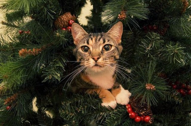 Cats on christmas trees 19 pics curious funny photos Christmas tree cat tower