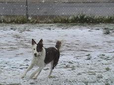 Liz running
