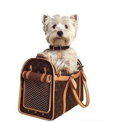 ... de posse das suas cachorreiras para passear com seus cachorrinhos