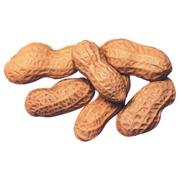 http://3.bp.blogspot.com/_fvKO-U5U8ow/Sw9nQtl7g_I/AAAAAAAAEVM/YYUXqinMDmo/s1600/toasted_peanut_in_shell.jpg