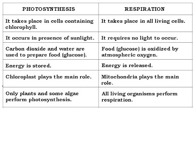 what is the difference between respiration and photosynthesis