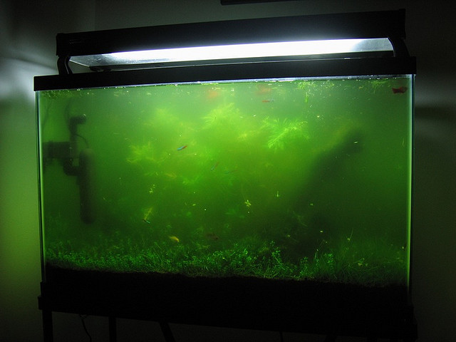biological fish tank algae control piece of mind