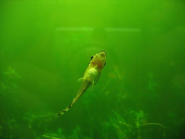Top Algae Eaters for Fish Tank Exotic Tropical Ornamental Fish ...