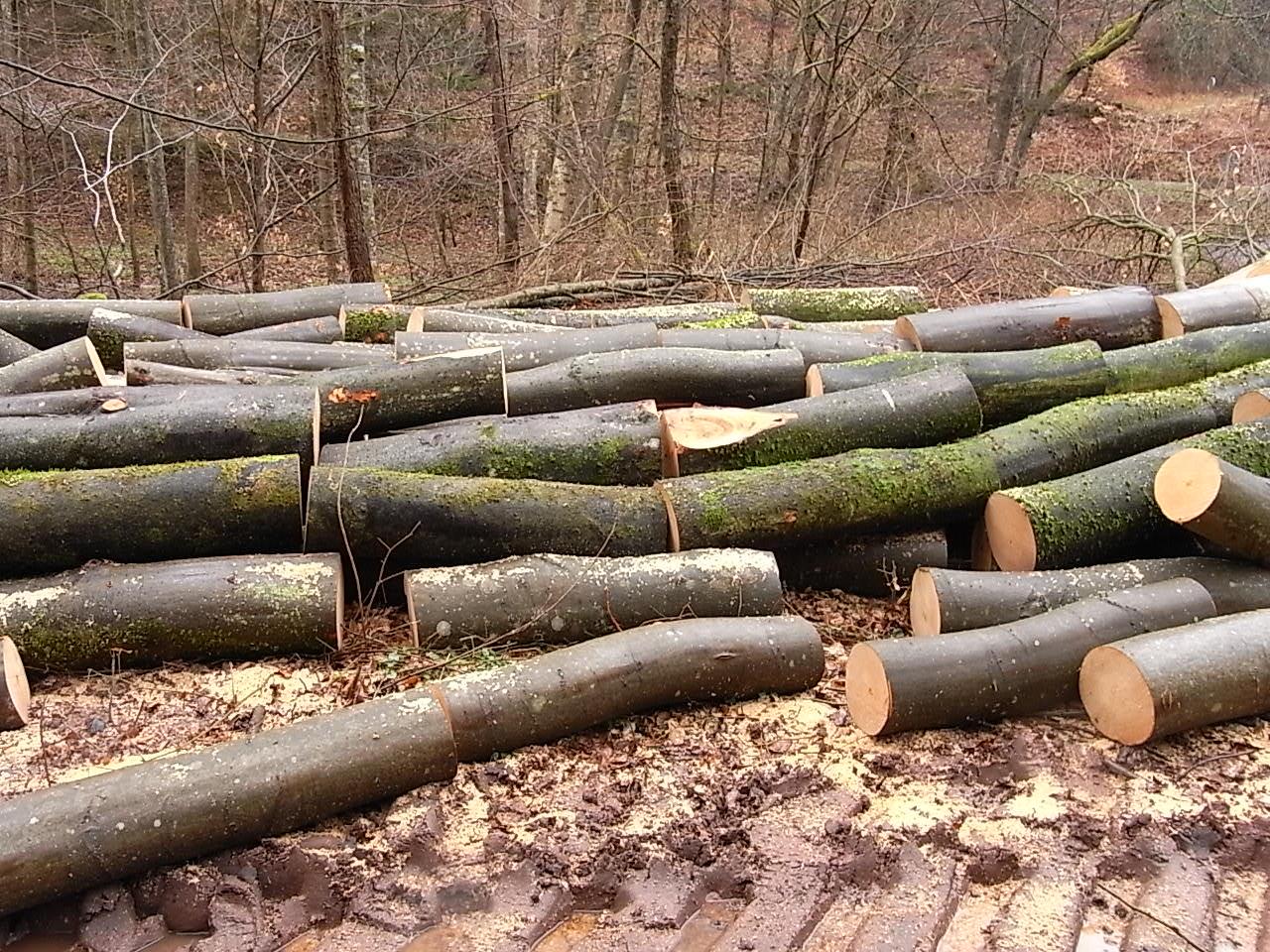 Ou trouver un billot pour fendre du bois for Bois flotte ou en trouver