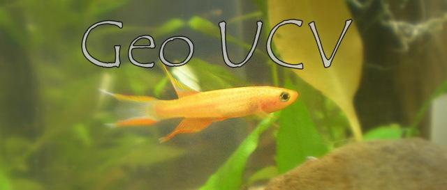 Geo UCV