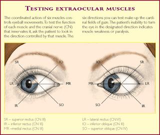 http://3.bp.blogspot.com/_g-k3egvZzMk/SqTUqlZm1NI/AAAAAAAAAyE/cOHpy0BWOWc/s320/peripheral+vision+loss.png