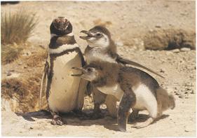 FAMILIA DE PINGUINOS