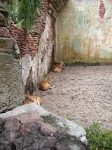 BAMBIS ANIMAL KINGDOM