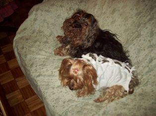 Maguie recién operada y  Chicho cuidándola