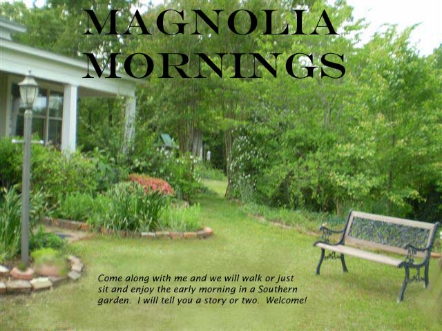 Magnolia  Mornings