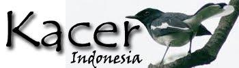 Burung Kacer Indonesia