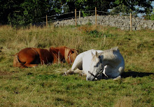 Hästarna