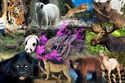 En esta semana, realizamos el collage, sobre los animales salvajes, .