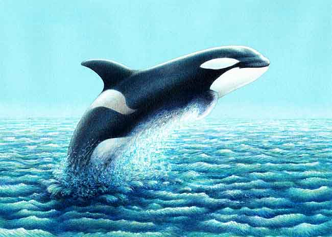 Ballenas