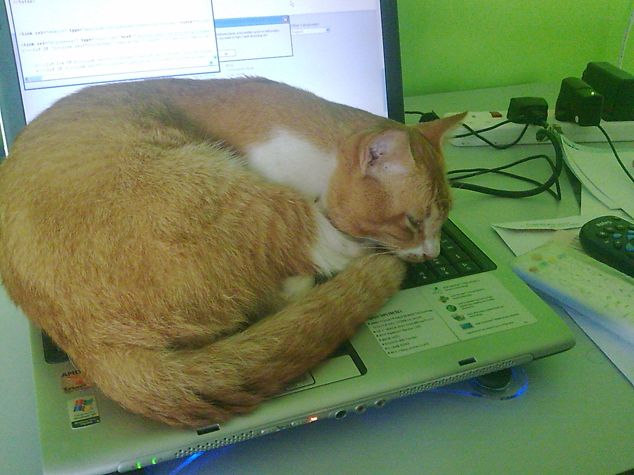 my cat sleep on laptop