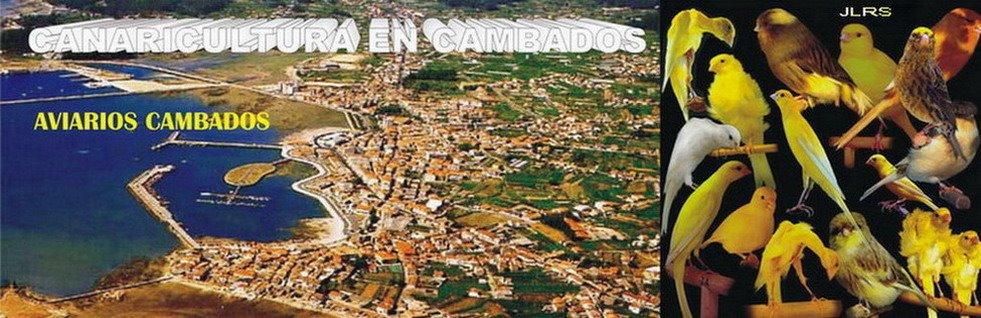 CANARICULTURA EN CAMBADOS