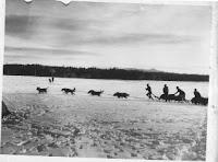 histoire du malamute lignée kotzebue