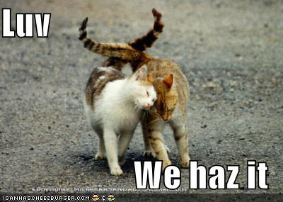 funny-pictures-cats-in-love-walking.jpg