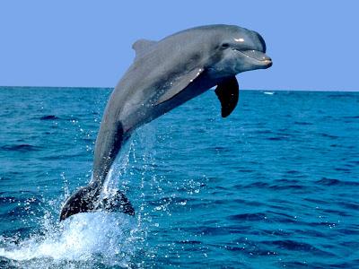.::Delfín nariz de Botella::. Delfin