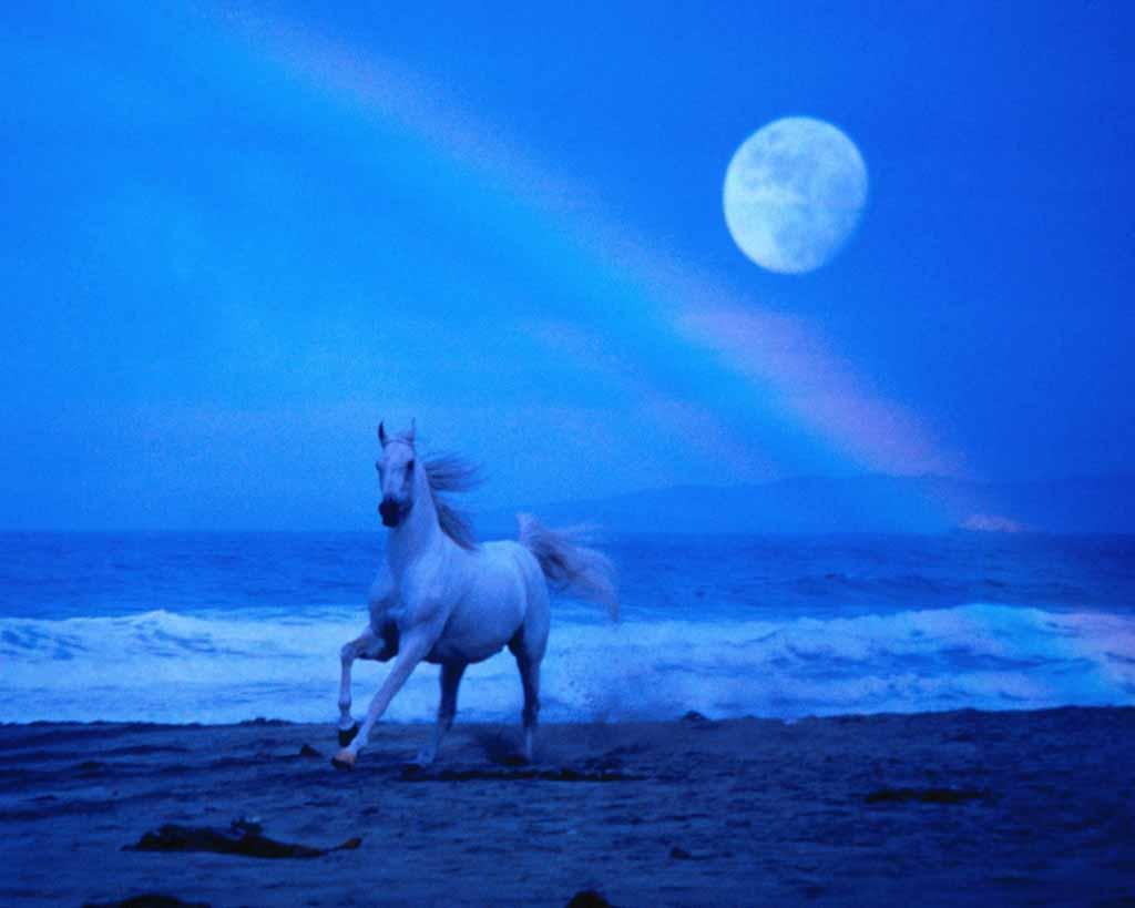 http://3.bp.blogspot.com/_gCOhUFiuy28/TDIojb6RE3I/AAAAAAAAAXY/4VynjqK00jI/s1600/horsemoon.jpg