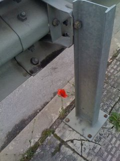 [flor+na+pedra]