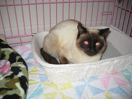Serenity Sitting in her Litter Box