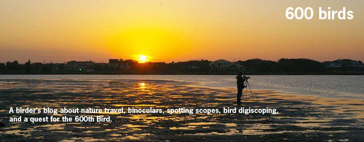 600 Birds