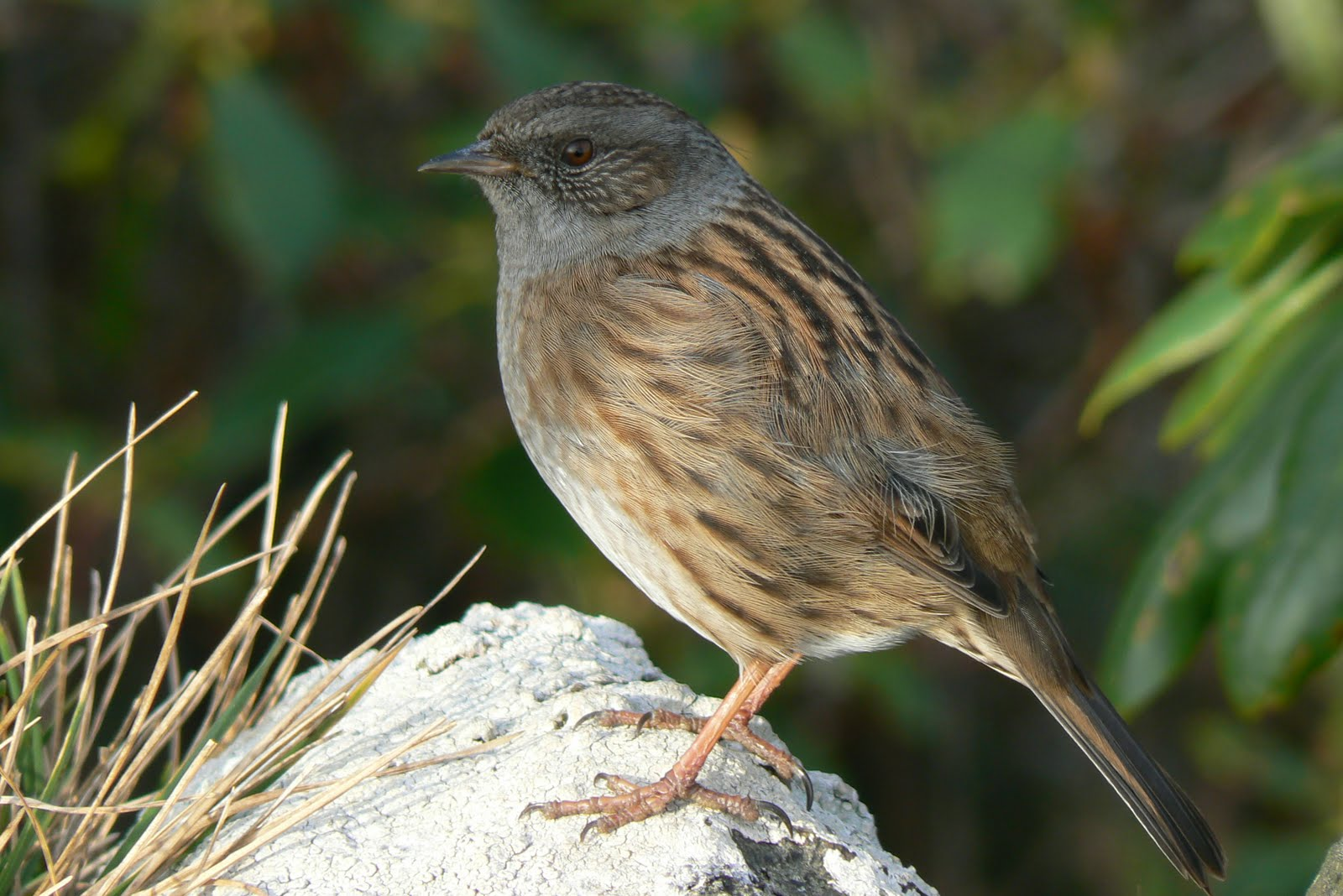 A Kilchoan Diary The Forgotten Small Bird