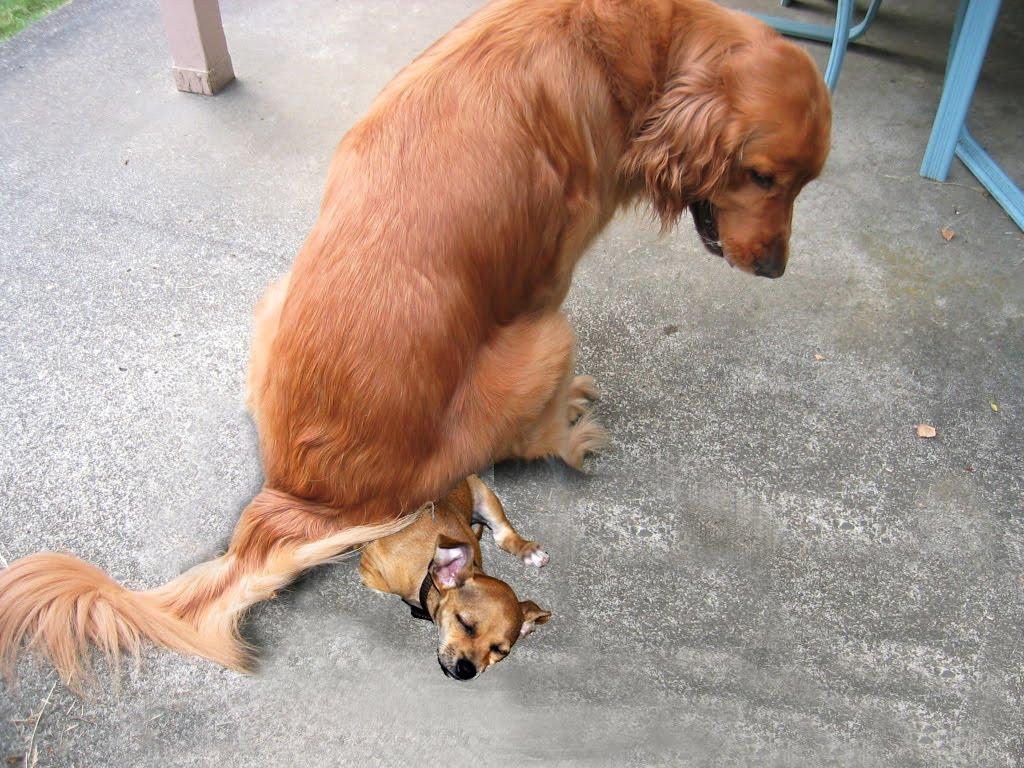 Dog Slobbers After Food
