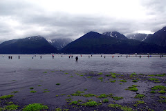 Everyone Trying to Snag the Salmon in Seward