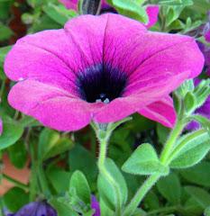 Flower at RV Park in Kenai