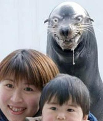 http://3.bp.blogspot.com/_gIaOV8O1DA4/SdFaa2yoiDI/AAAAAAAAAKk/EupwUXUoGDY/s400/WTF+Wednesday+-+Rabid+Seal.jpg