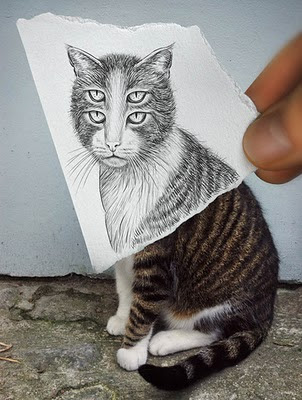 Drunk Effect - Cat Optical Illusion