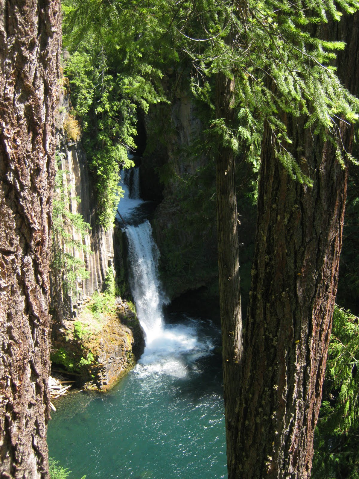 Basalt Stone Umpqua National Forest : Borrowed times thundering waters toketee falls july th