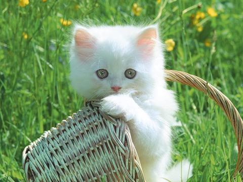 [kucing+2.JPG.htm]