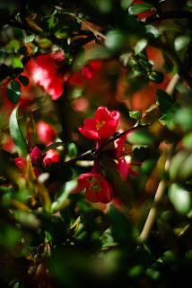 alexandru hategan, fotograf, fotografie, targu mures, flori, floare, primavara,  rosu, verde,  capitol