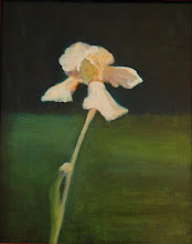 Pale Yellow Iris Study