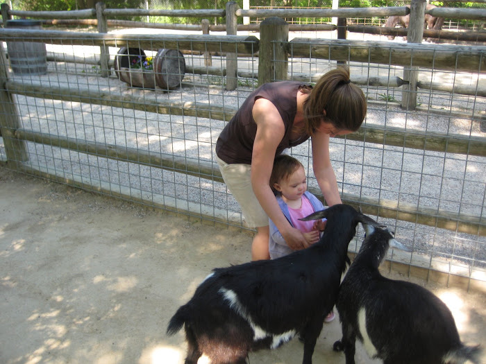 Feeding the baby goats