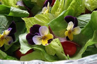 [Image: LettuceViolas.jpg]
