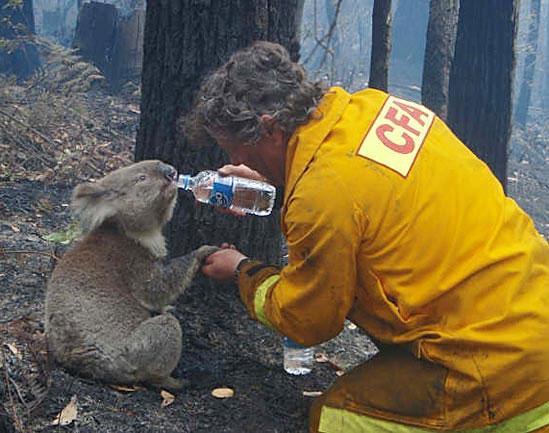 [Amor+(Homem+dando+de+beber+a+coala)+Lindo!!!.htm]