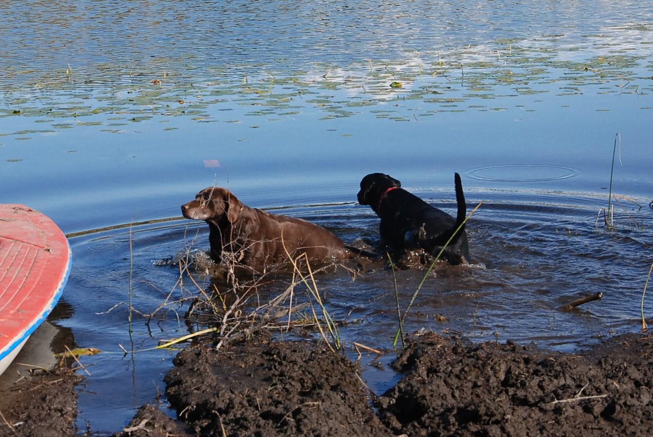 [Mud+Dogs.JPG]