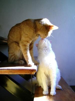 http://3.bp.blogspot.com/_gTJMEP-c2fo/SLff5YXUcUI/AAAAAAAAECM/A8oy8dqqxDo/s400/kitty+kiss.jpg