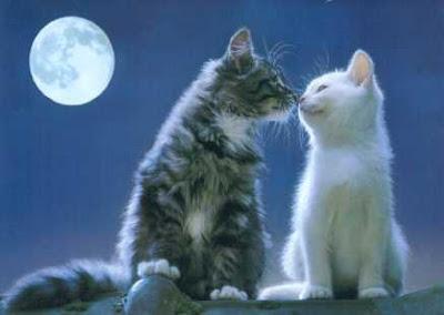 http://3.bp.blogspot.com/_gTJMEP-c2fo/SLfiFN5Z62I/AAAAAAAAECk/3H0rdxXzmOw/s400/Cat_Lovers.jpg