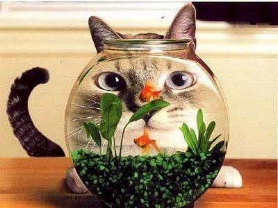 Imagens [Humor] Será que o peixe também ve o gato grande? Funny+cat+02