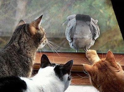 котки и птица